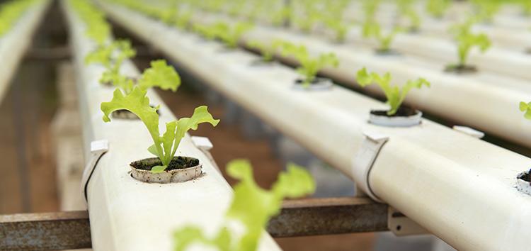 Technologies climatiques dans le secteur agroalimentaire